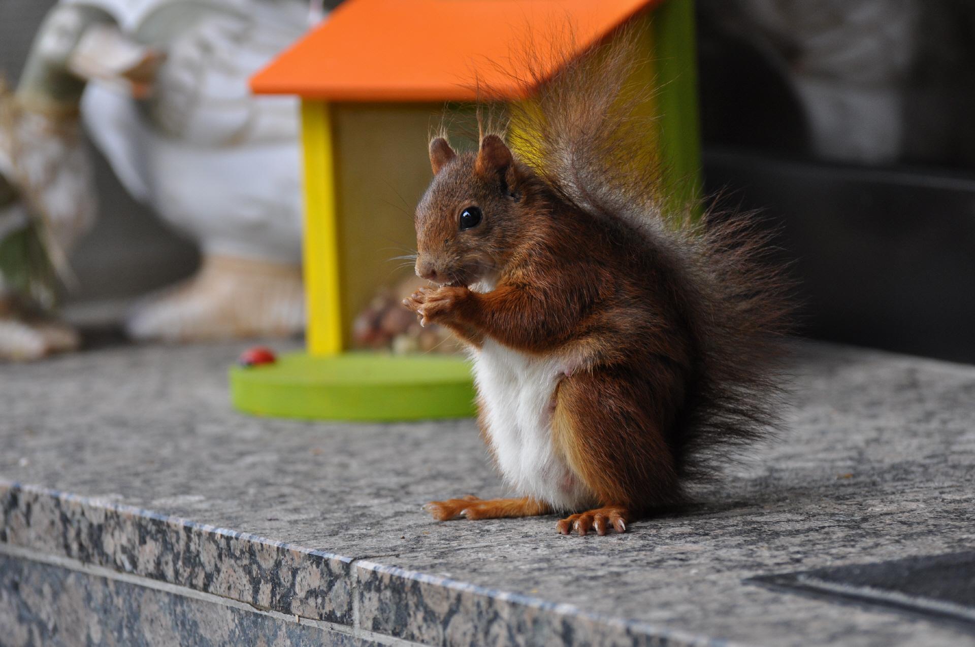 Futterstation für Eichhörnchen